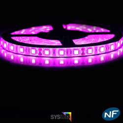 Ruban LED Professionel 5050 / 60 LED mètre rose étanche