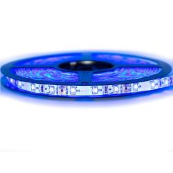 Ruban LED Professionnel 3528 / 60 LED mètre bleu electrique pour intérieur (IP65) 1 ,2,5 ,5,10 mètres aux choix