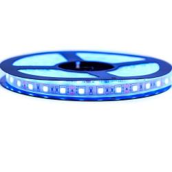 Ruban LED Professionel 5050 / 60 LED mètre bleu electrique étanche